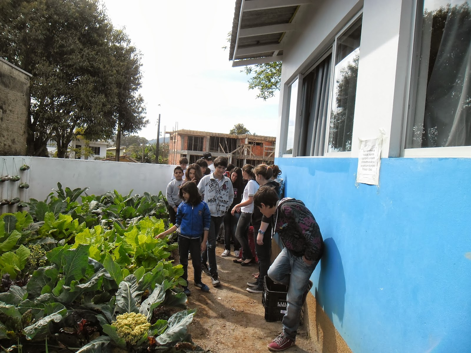 #157BB6 AMBIENTE VITAL: PROJETO ESCOLA MEIO AMBIENTE E SAÚDE( O DIA DA  1600x1200 px Projeto Cozinha Experimental Na Escola #2535 imagens