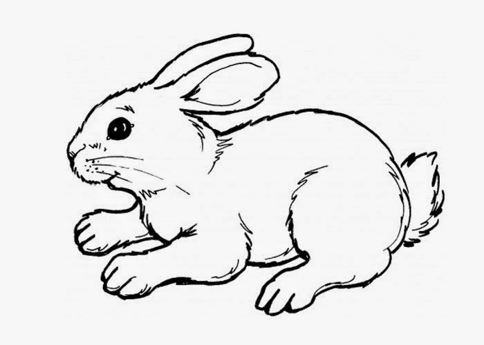Cute bunny coloring page | Free Coloring Pages and ...