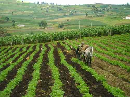 tambin podemos incluir que con el uso del abono orgnico puede ocasionar el suelo ya que se obtienen beneficios tales como