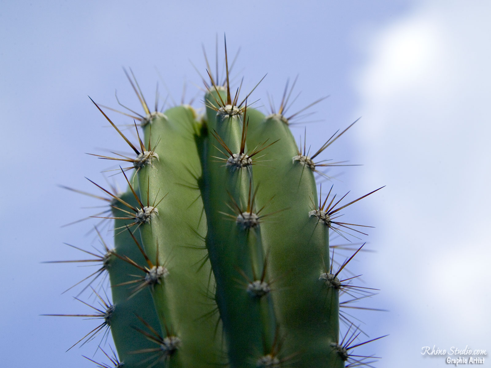 http://3.bp.blogspot.com/-3Jw2UcngB7Q/T94ruRrVZZI/AAAAAAAAIFQ/zm5jL-F-_5g/s1600/cactus%252Ccactus%2Bwallpaper%252Ccactusi%252Ccactus%2Bfoto%252Cpoze%2Bcactusi%252Cimagini%2Bcactus.png