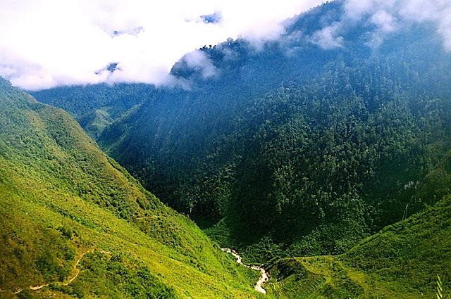 Imag-5_paisaje-natural-bosque-melanesia