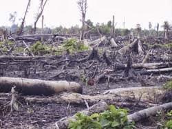 Kerusakan Lingkungan Hidup dan Pelestariannya