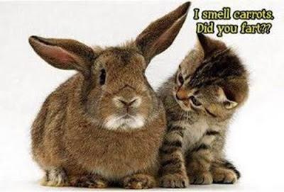 Katze und Hase: Ich rieche Karotten. Hast du gefurzt?