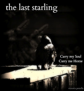 The Last Starling