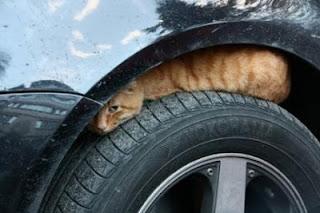 Кошка под машиной