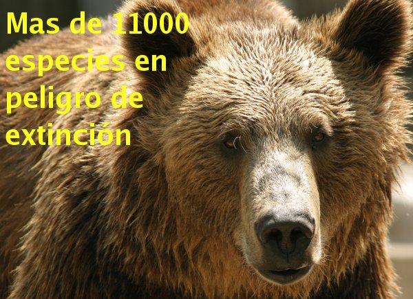 TEMA LOS ANIMALES