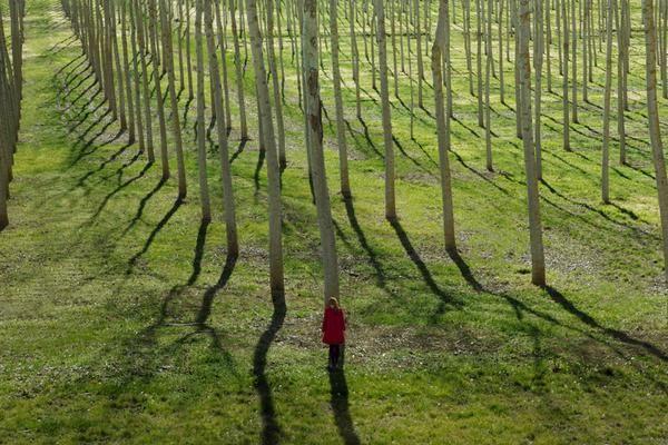 Foto de mujer en bosque