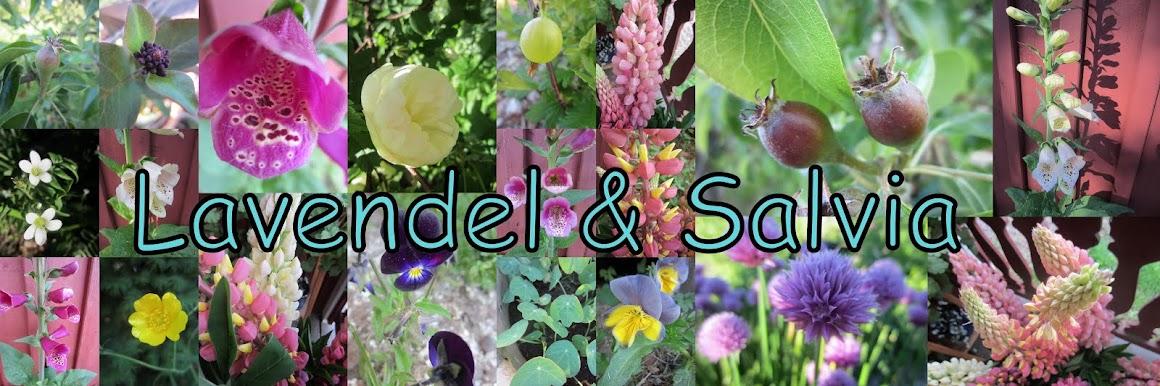 Lavendel & Salvia