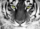 Teknik-Teknik Senaman Harimau