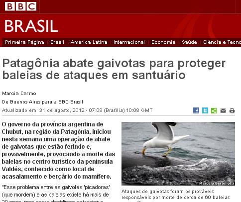 Patagônia Argentina abate gaivotas para proteger baleias de ataques em santuário