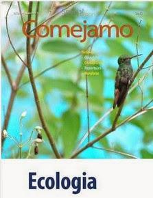 Colibri esmeralda,Olanchito,Honduras