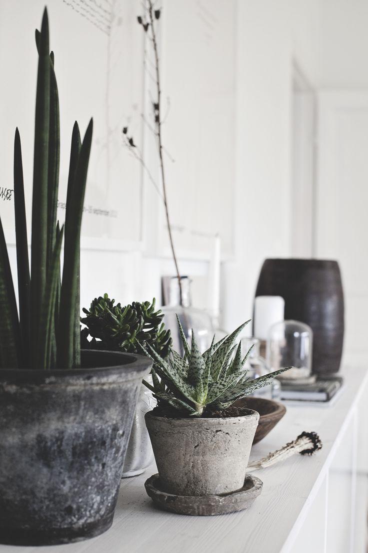 Decor Inspiration Succulents Cactus Sanseveria And Plants Cool Chic Style Fashion