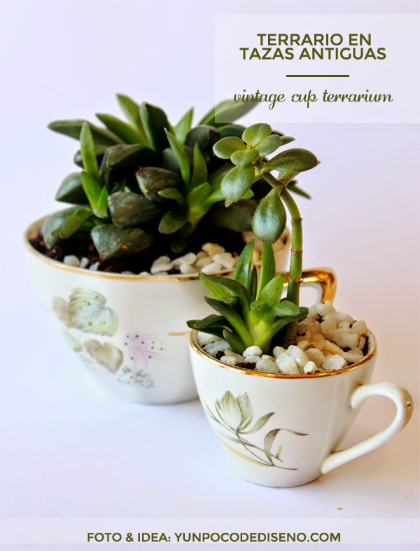 terrarios mini hechos con tazas antiguas vintage