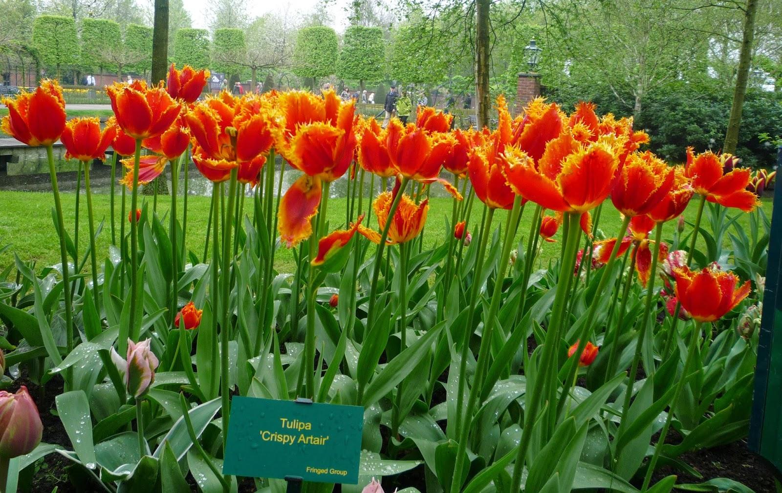 Mai Thai Wanderings Keukenhof Tulip Garden In Amsterdam