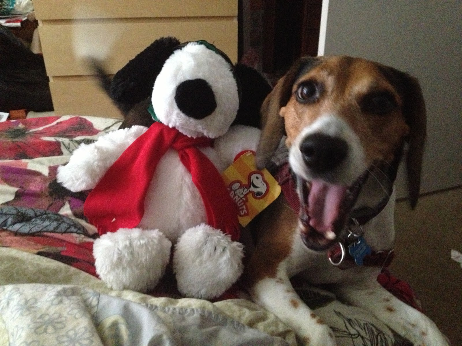 Dogs that look like snoopy 11