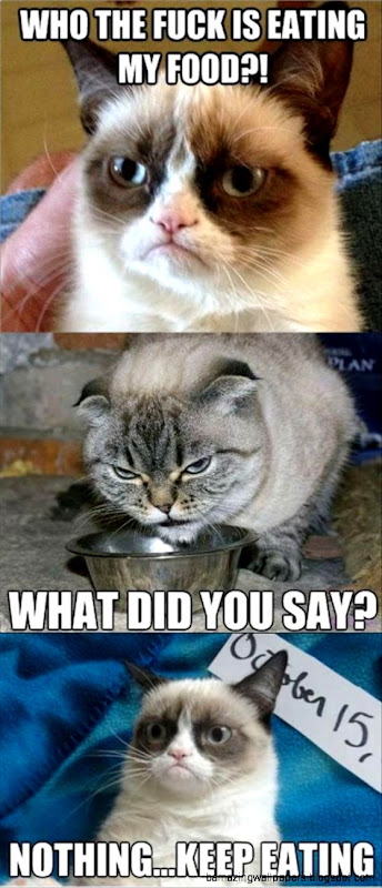 Gray Cat Manages To Scare Away Grumpy Cat Funny Pic   Grumpy Cat