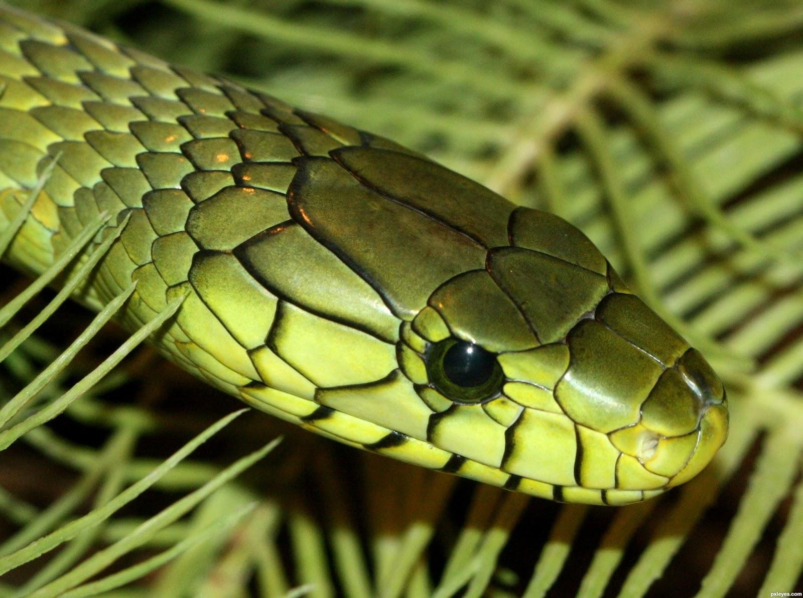 Мамба зеленая смотреть змеи