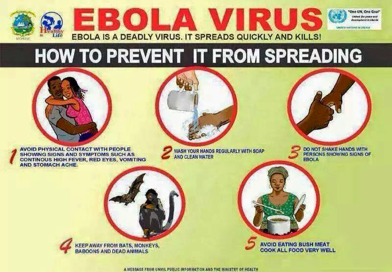 What does Ebola actually do?