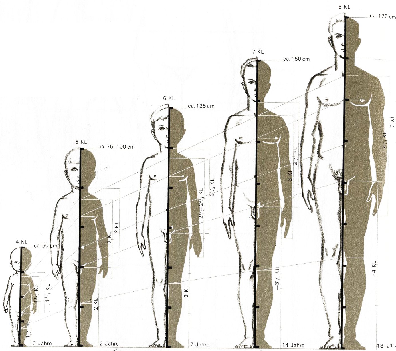 Human Figure Proportions figure-drawing introduction
