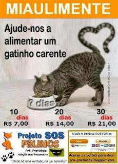 Ajude o Projeto SOS Felinos ♡♥♡