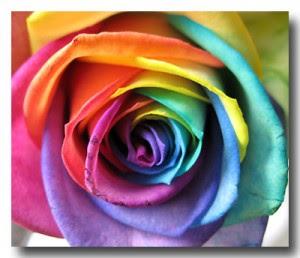 Real Rainbow Rose Garden