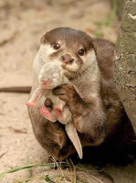 cutest animals,funniest animals,amazing animals pics