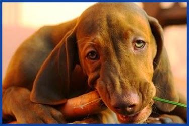 Der Struwwelköter: Lustige Geschichten und drollige Bilder  - Lustige Bilder Von Hunden