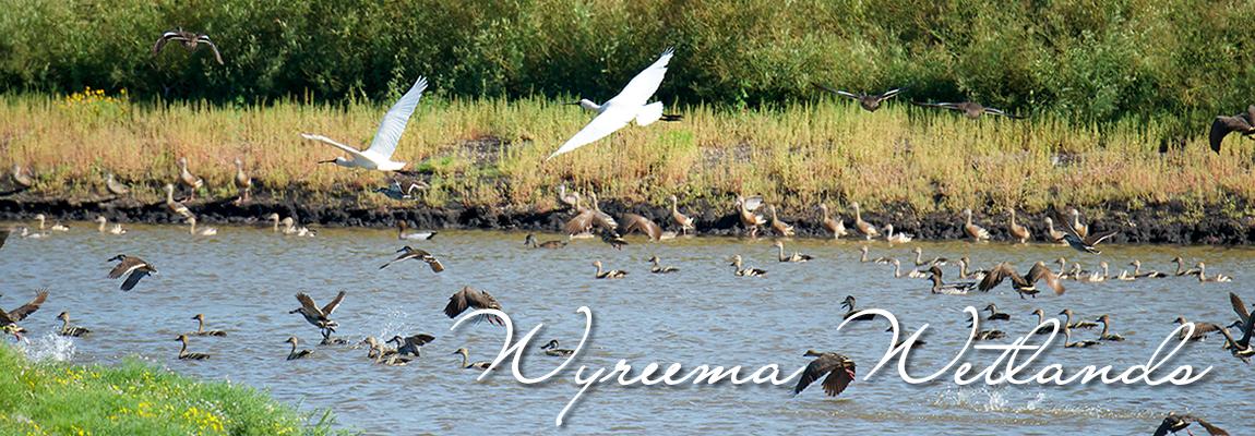 Wyreema Wetlands