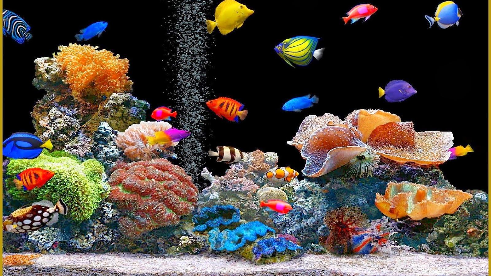 animated fish tank wallpaper wallpaper animated