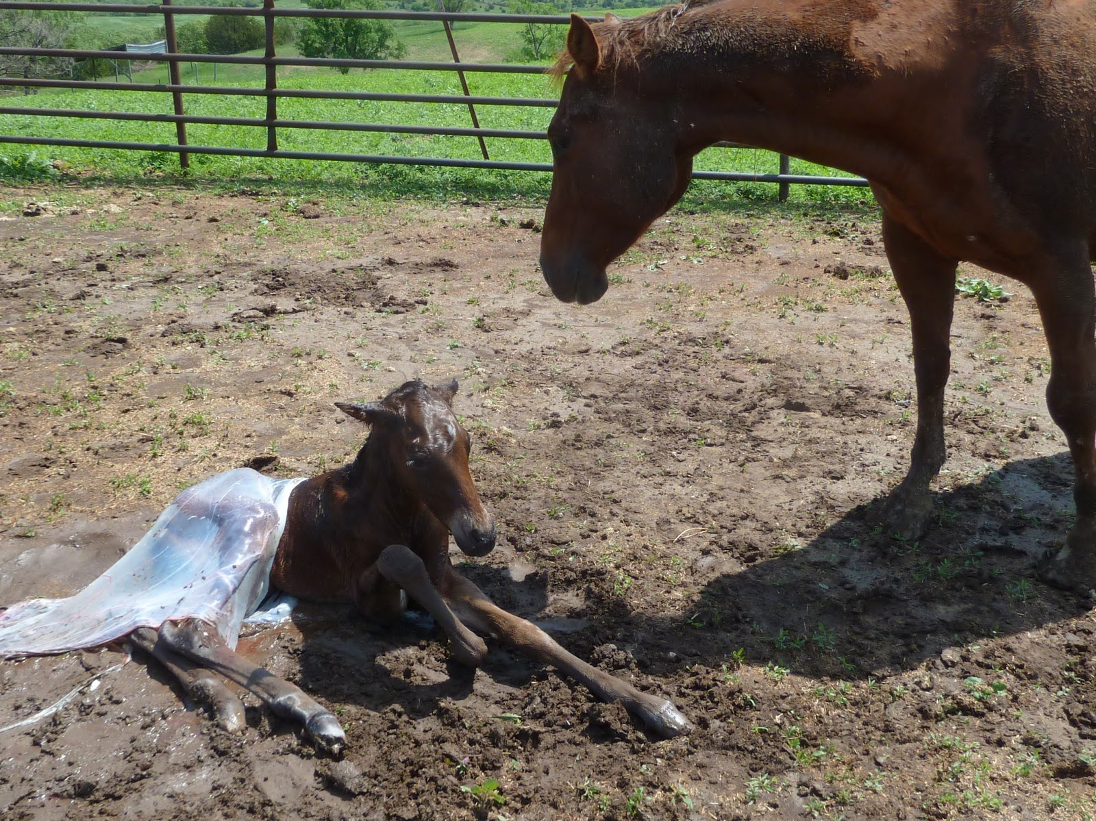 How to give birth to horses