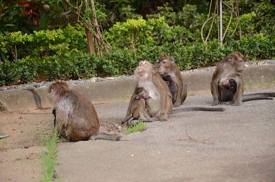 monkey mamas and babies