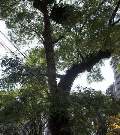 Benefícios das árvores
