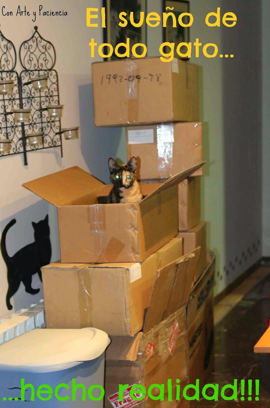 sueño,dream,came,true,gato,cat,kitty,gatito,box,caja,hide,esconden