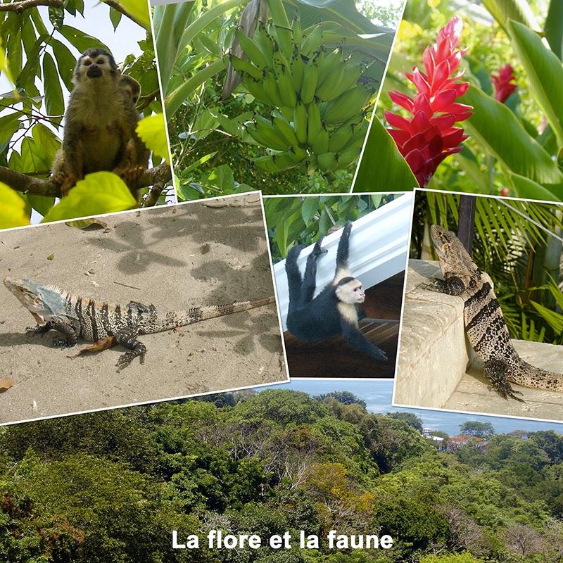 La flore et la faune à Manuel Antonio, Costa Rica