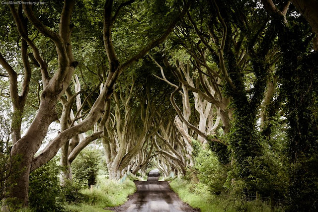 10. The Dark Hedges of County Antrim by David C