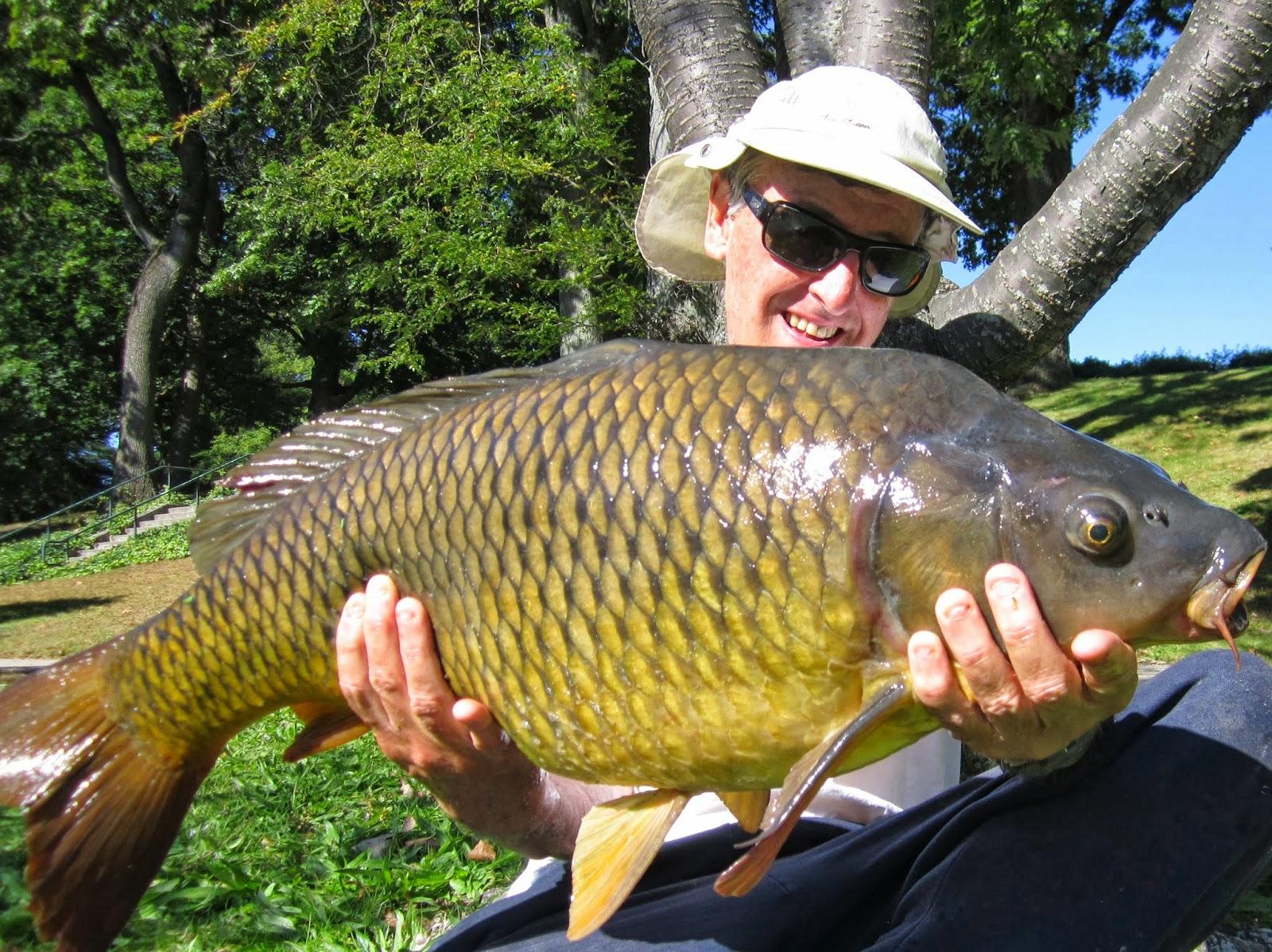 Rhode Island Carp Fishing: Big Carp in Small Spots