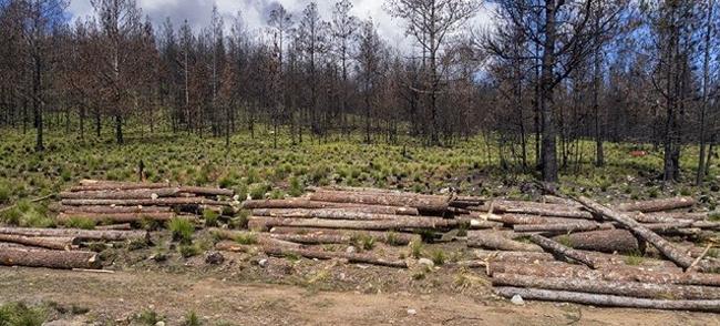 Destruyen bosques en Constanza con permisos de Medio Ambiente