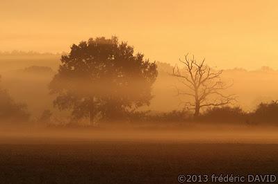 arbre silhouettes brume Villiers-en-Bière Seine et Marne