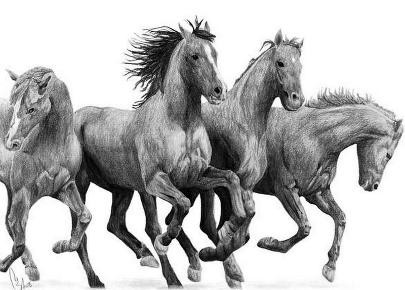 Mirarte Galería: A10 Dibujos de caballos