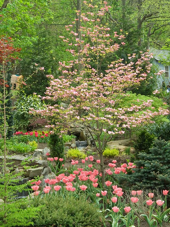 Beautiful Small Tree Flowering Dogwood