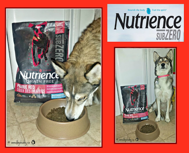 grain free raw infused dog food #subzerodifference