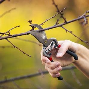 pruning atau pemangkasan