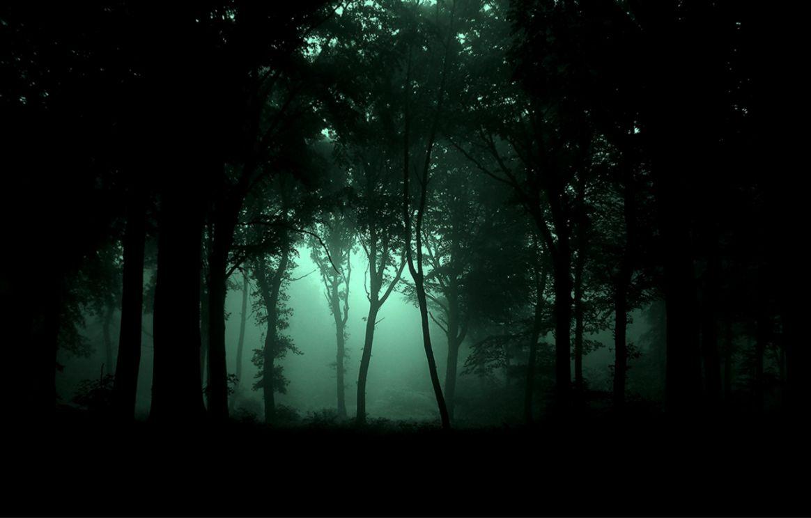 Dark Forest Night id 29260 – BUZZERG