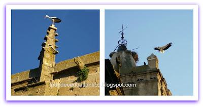 Cegonhas em ninhos no alto das casas, são comuns em Cáceres, Espanha