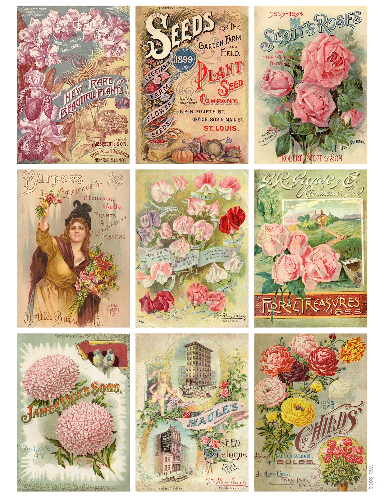 Witty image intended for free printable seed packets
