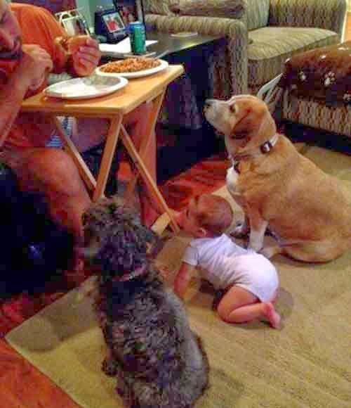 Funny Baby with Dogs for Food