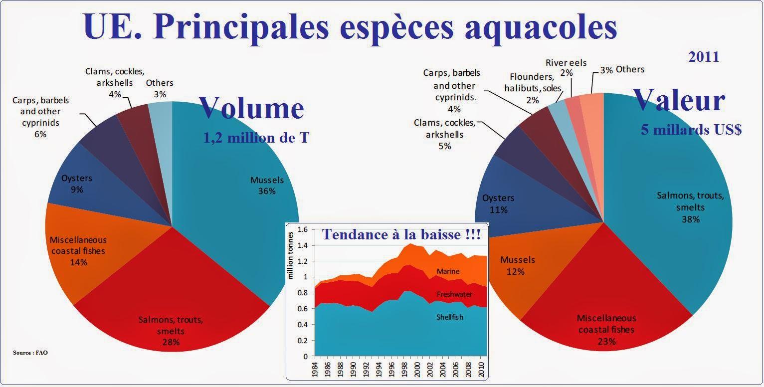 Le paradoxe de l 39 aquaculture selon l 39 agro business for Elevage des carpes