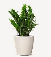 piante facili da coltivare in appartamento