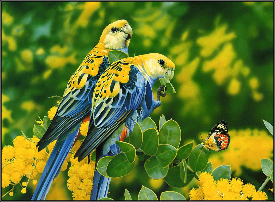 Wallpapers 2013  Beautiful And Dangerous Animals/Birds Hd Wallpapers