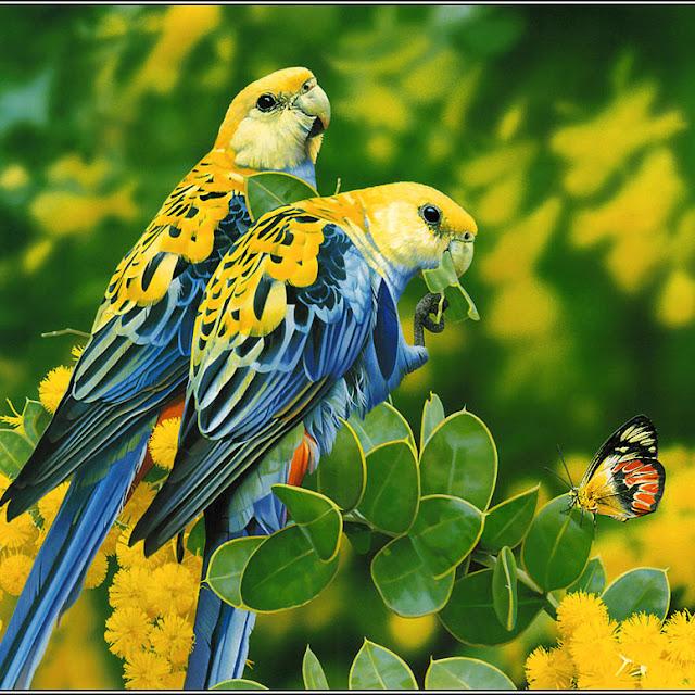 foto burung